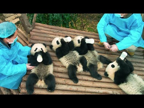 PANDAS - OFFICIAL TRAILER [HD]