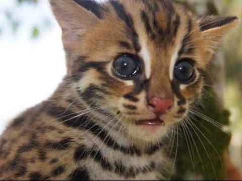 Unduh 76+  Gambar Kucing Harimau Paling Lucu Gratis