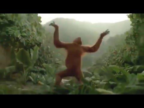 Смешное видео про обезьян - Самое смешное видео 2015