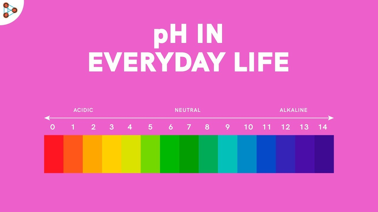 pH in Everyday Life | Acid Bases and Salts | Don't Memorise