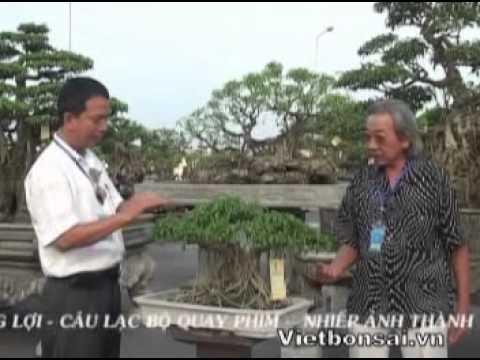Triển lãm sinh vật cảnh Côn Sơn - Kiếp Bạc - Hải Dương P8