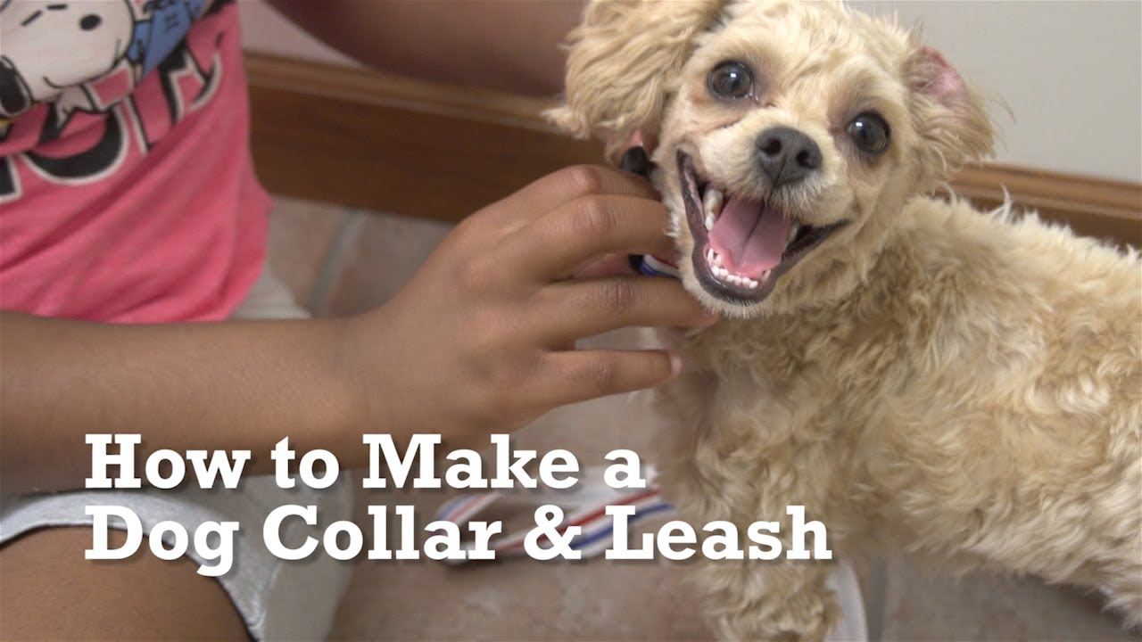 how to make a dog collar leash youtube. Black Bedroom Furniture Sets. Home Design Ideas