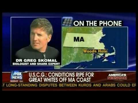 Great White Shark WARNING for July in Massachusetts FOX News