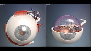 Скачать 3D Анатомия человека глаз 3D Anatomy Human Eye