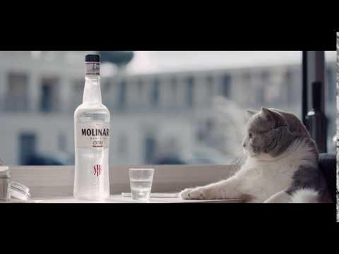 Spot Molinari 2017 testimonial un gatto
