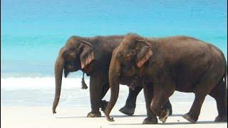 A trek to elephant beach in Havelock islands.