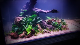 HOW TO Aquascape an XL Nature Aquarium
