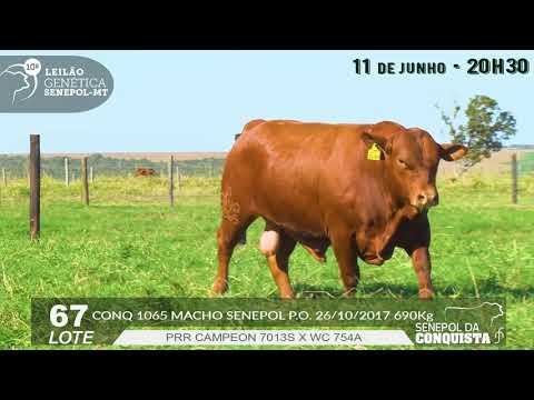 LOTE 67   CONQ 1065