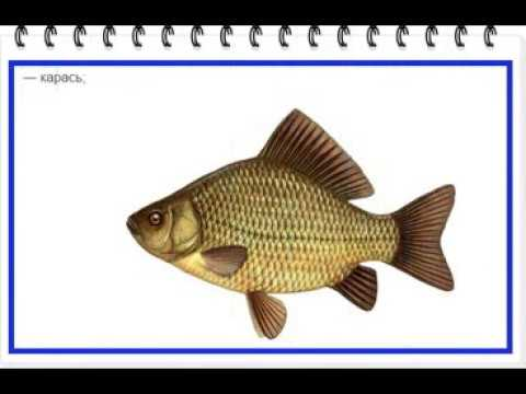 Рыбы наших водоемов Атлас рыб Пресноводные и морские