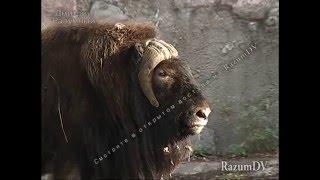Детям о зоопарке. Животные России и других стран