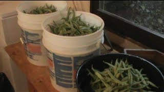 Preserving Green beans Appalachian Style: Wilderness Outfitters of the Appalachians