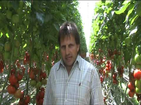 Ruud van Schie, Nature&More organic Tomato and pepper grower
