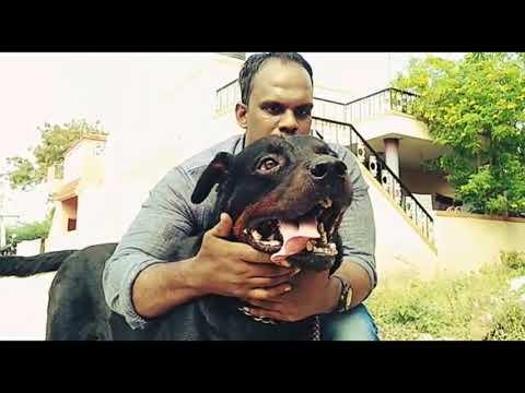 My Dogs |Rottweiler | Siberian Husky |Compilation