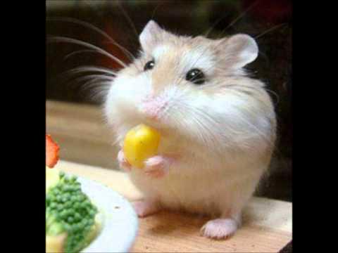 พากย์ นิทานภาษาอังกฤษ The Hungry Mouse
