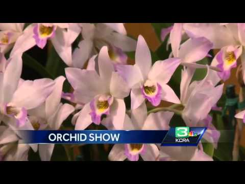 Orchid show brings exotic flowers of the world to Sacramento