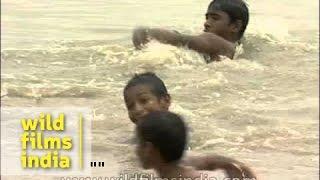 Repeat youtube video Kids splashing around in the waters of Yamuna River, Delhi