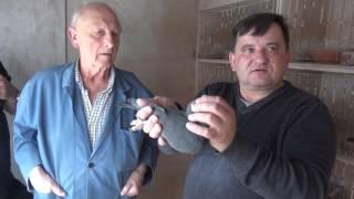 Schroyens Hubert - hodowla - gołębie Houben - 08.04.2017 r