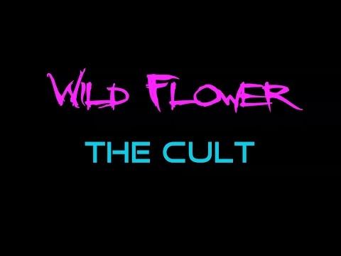 Wild Flower - The Cult  ( lyrics )