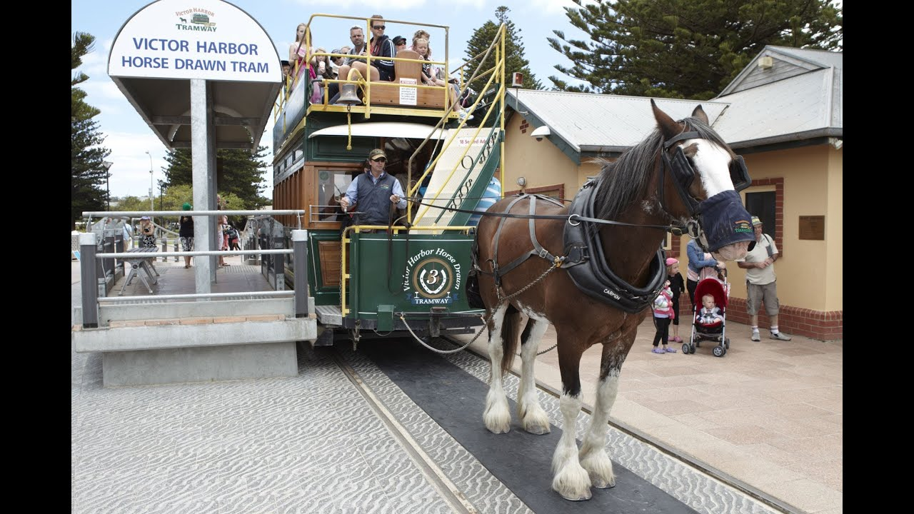 victor harbor horse drawn tram south australia youtube