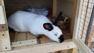 Обзор клеток для кроликов и немного нашей жизни.