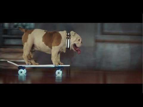 Bulldog Skater Otto - MADE VISIBLE