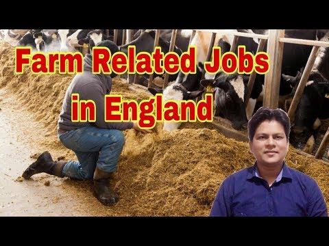 Farm Related Vacancies In England