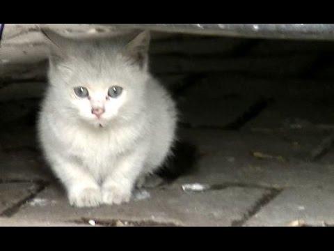 驚き!子猫に伝えてと頼むと実行した猫 保護できる?♯2 お散歩に行こうとしたら猫がいて