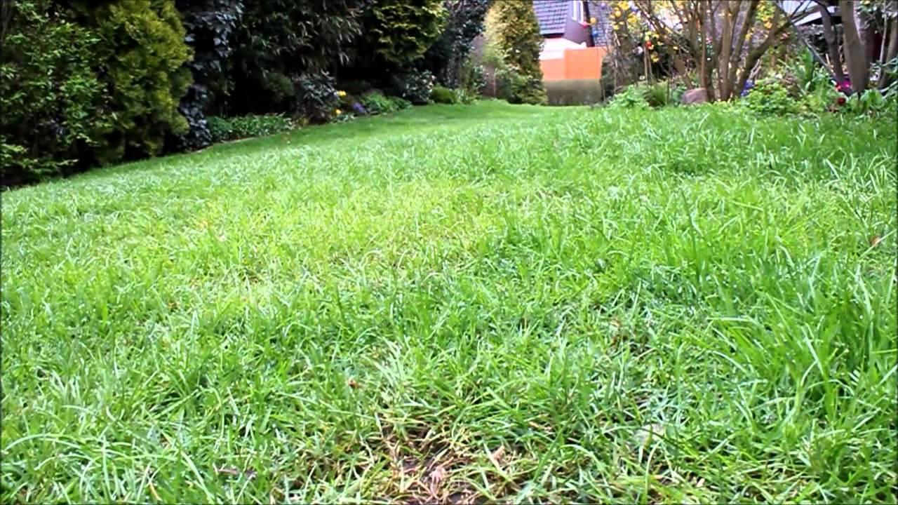 Gartenpflege  Gartenpflege im April Rasen und Pflanzen - NewWonder555 - YouTube