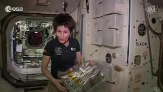 Space food and the good side of lipid fat