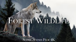 Forest Wildlife In 4K  Animals That Call The Forest Home | Scenic Relaxation Film