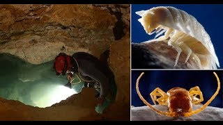 Movile Cave | The Only Place On Earth Like Mars Habitat