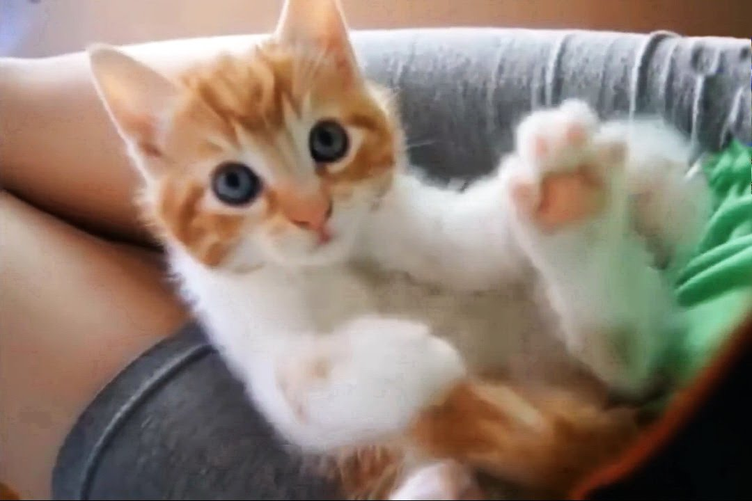 Funny Cute Cats And Kittens Compilation # 4