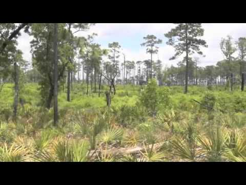 A Celebration of Wilderness, National Forests in Florida
