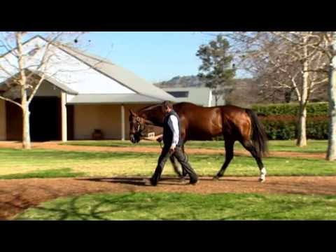 Redoute's Choice Stands At His Highness The Aga Khan's Haras De Bonneval In France