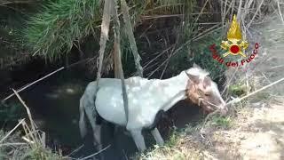 Cavallo ghiotto di cannucce finisce nel canale, recuperato dai Vigili del fuoco