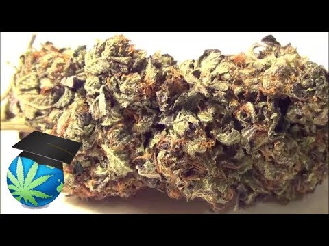 How To Tell Quality of Weed Visually (Episode SAMPLE ONLY)