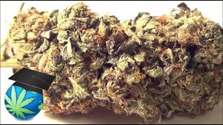 how to tell good quality weed from bad yt promo sample