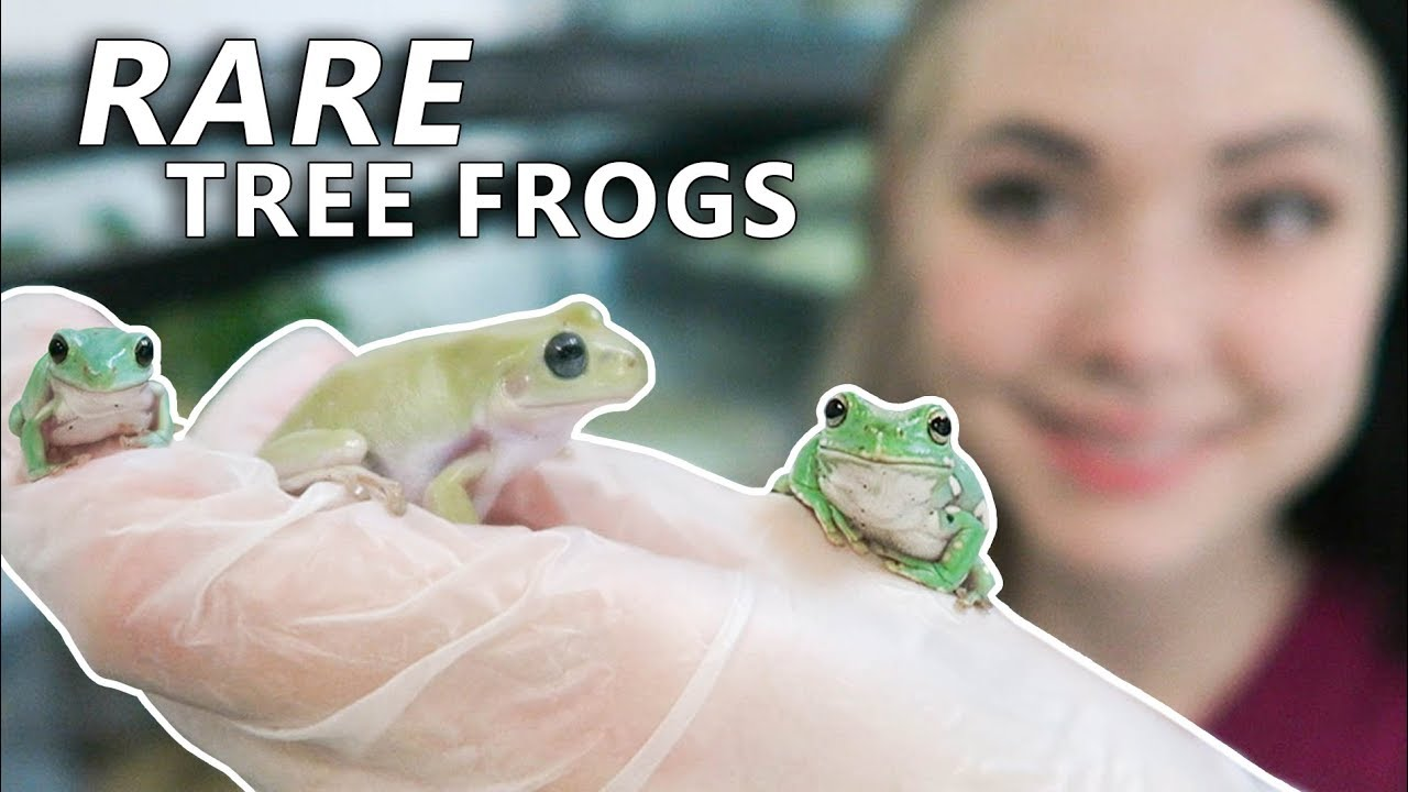 my-new-frog-peed-on-me