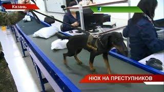 Ищут наркотики, оружие и деньги: работа кинологической службы татарстанской таможни | ТНВ