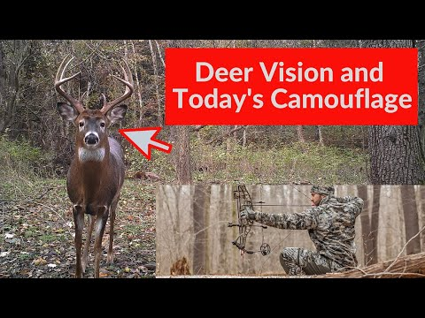 Deer Vision And Modern Camouflage Clothing