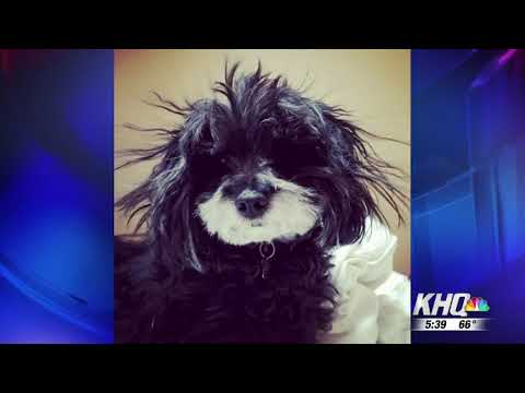 National Spoil Your Dog Day — KHQ 08 10 2017
