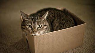 Кошка сидела в коробке и никого не подпускала, как оказалось под собой она скрывала нечто ценное