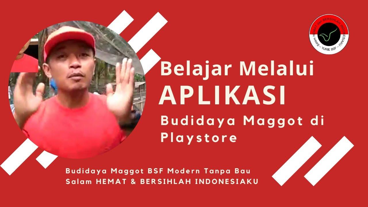 Download Video Tutorial Khusus di PlayStore Budidaya Maggot BSF Modern Tanpa Bau