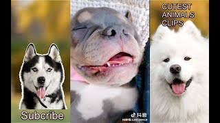 CUTEST ANIMALS IN THE WORLD #5 - CUTE PETS SLEEPING - CUTE PETS SLEEPING COMPILATION 2019 P1
