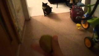 Высокий прыжок кота!