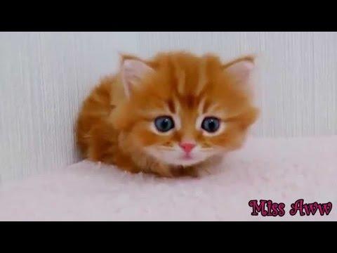 Çocuklar Sevimli Yavru Komik Kedi Videoları Youtube Komik Hayvan Videoları Için Komik Hayvan Videol