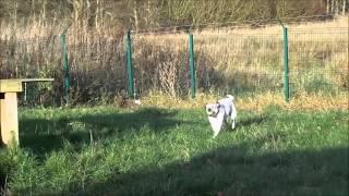 Dogs Trust West Calder - Thelma