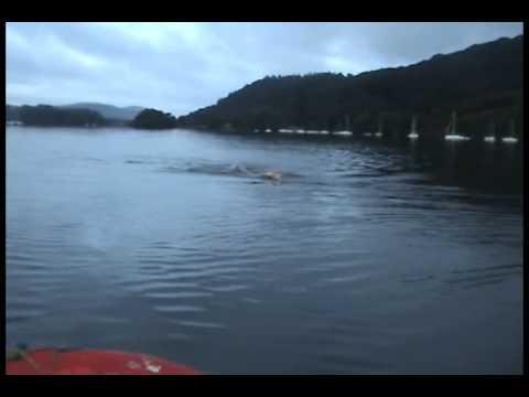 Lake Windermere Two Way Swim