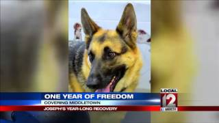 Update: Joseph, Abused German Shepherd's Yea
