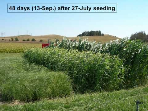 Growing Annual Forages Jerry Volesky